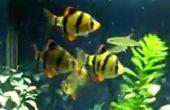 Comment choisir le bon poisson pour votre aquarium