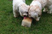 Simple régal d'été pour les chiens, battre la chaleur !