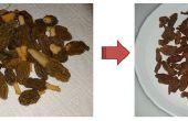Fried Morel (variété de début de saison)
