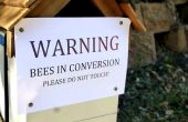 Ruche d'abeilles indigènes