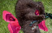 Rendre un chaton dans une fée mystique