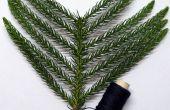 Prank Leaf sapin