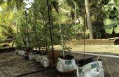 Système d'irrigation bricolage pour plantes