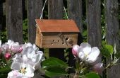 Récupéré la boîte en bois abeille