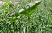Utiliser des granulés de paille pour empêcher les mauvaises herbes dans votre jardin