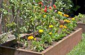 Faire pousser des légumes dans votre arrière-cour