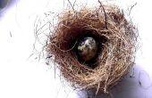 NID & oeufs du faire un oiseau (diaporama)