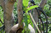 Les jardins suspendus de Babylone (avec Gourde!)