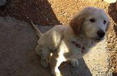 Comment apprendre à votre chien de s'asseoir facilement