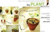 La base de la plante bras