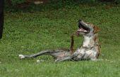 Harnais pour chien au Crochet, DIY