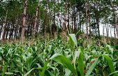 Agroforesterie - Agriculture intégrée