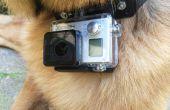 Collier de chien GoPro