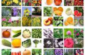 Comment planifier des trois saisons de plantes sympathique bee