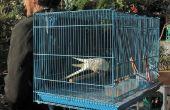 Faire un sac à dos Birdy, visant l'exploitation d'un oiseau de compagnie (ou deux).