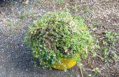 Comment faire pour activer ennuyeux jardin Weeds, transformé en délicieux oeufs frais