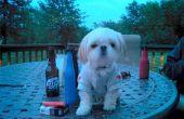Super facile foie traite pour votre chien !