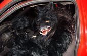 Costume de loup garou
