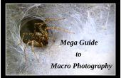 Guide de Mega à la macro-photographie