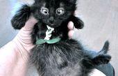 Harnais chat-et-chaton-toléré (pull, aucun-cousez version)