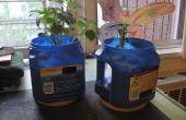 Planteurs de café peut