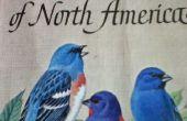 Un Guide complet pour observer les oiseaux