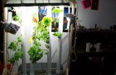 Jardin d'aquaponique vertical