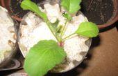 Comment faire pour avoir votre très propre jardin hydroponique