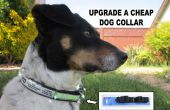 Upgrade A Dog Collar