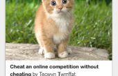 Comment s'occuper d'un petit chaton