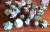Cactus gâteaux pour ceux que n'ont pas décoré gâteaux avant