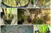 Plante d'intérieur arrosage System