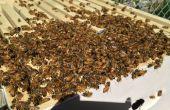 Ruche/installer une colonie d'abeilles d'un paquet