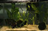Aquascaping : l'art du jardin sous-marin