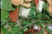 Faire salade de mauvaises herbes dans votre jardin.