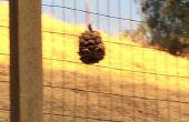 Mangeoire à oiseaux pinecone #hercules2016