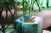 Bombe à croître en plastique : culture hydroponique de sacs en plastique