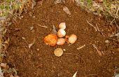 Apprenez comment de Compost dans Less Than an Hour