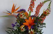 Arrangements de vase : Conseils pour Triumph