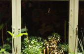Un rideau de lumière