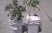 Comment faire un Single-seau d'eau automatique régulée Vegatable planteur
