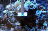 Aquarium grattoir d'algues têtus