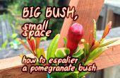 Gros buisson, petit espace ~ comment efflorescent un buisson de Grenade