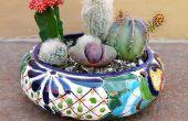Comment faire pour créer un jardin de cactus plat & garder votre colonne vertébrale du doigt gratuit