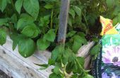 Construire une boîte de pomme de terre à l'aide de palettes & ferraille bois