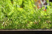 Comment faire le plus de votre espace de jardin et de cultiver plus de légumes