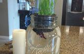 Il suffit de garder natation aquaponique - grandir herbe de blé