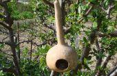 Simple courge Birdhouse avec une branche