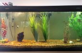 DIY : Comment mettre en place un aquarium
