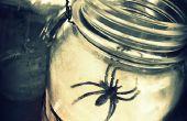 Spider Web lanternes